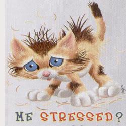 4513-cat-stressed
